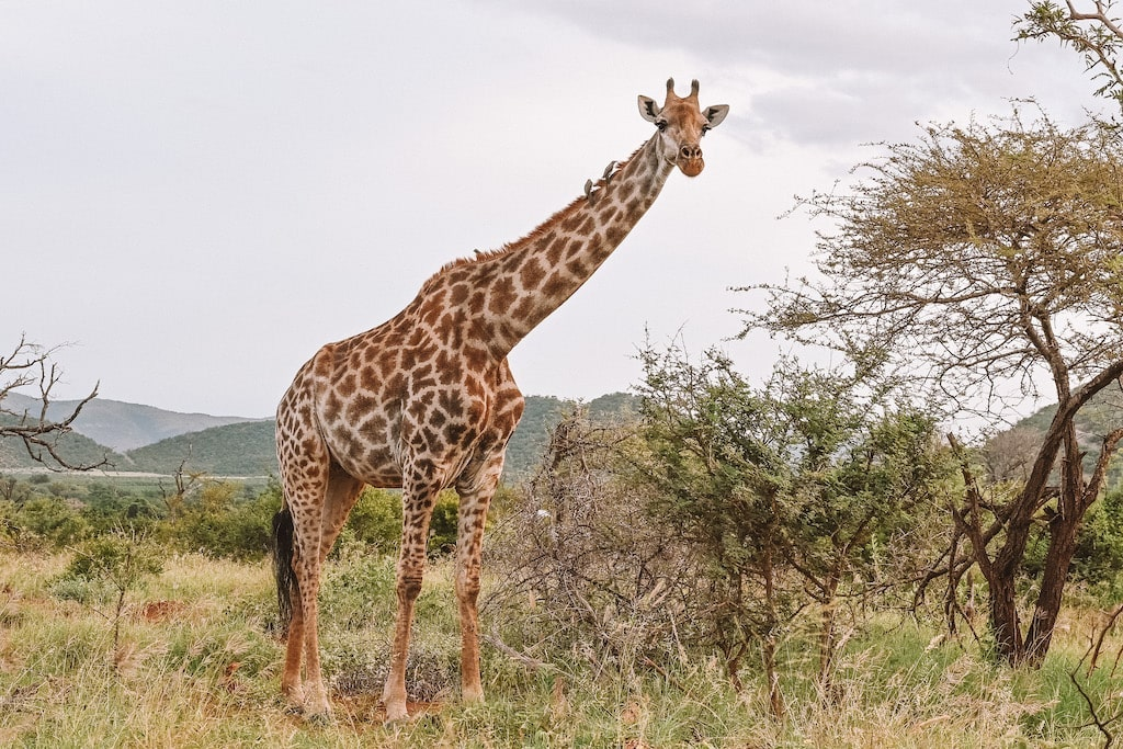 20 Photos inside Safari, South Africa