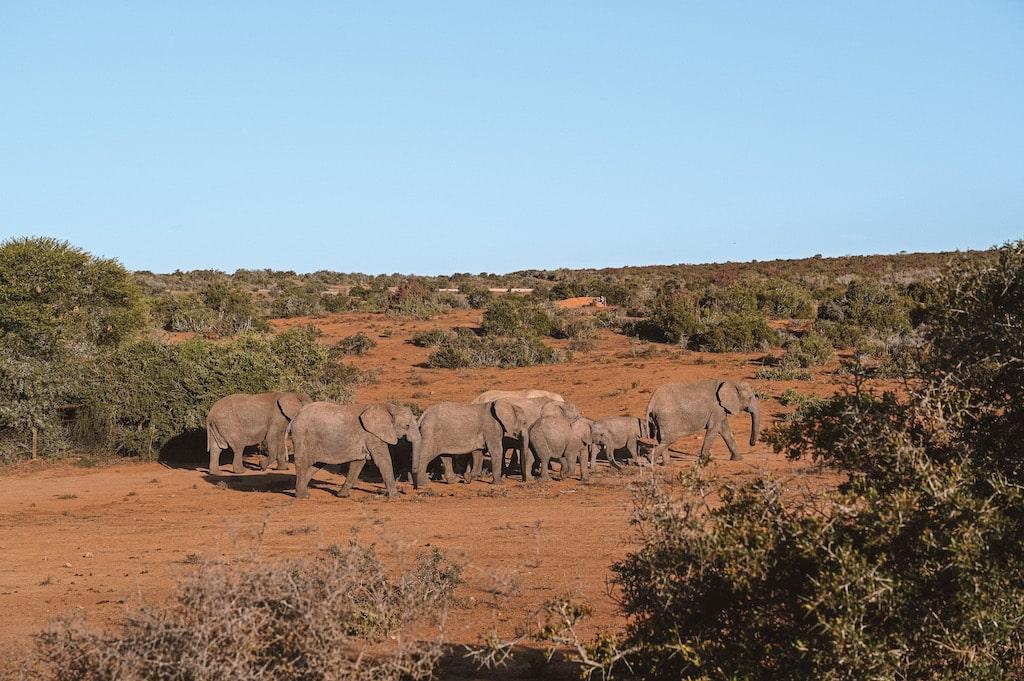 20 Photos inside Safari, South Africa3