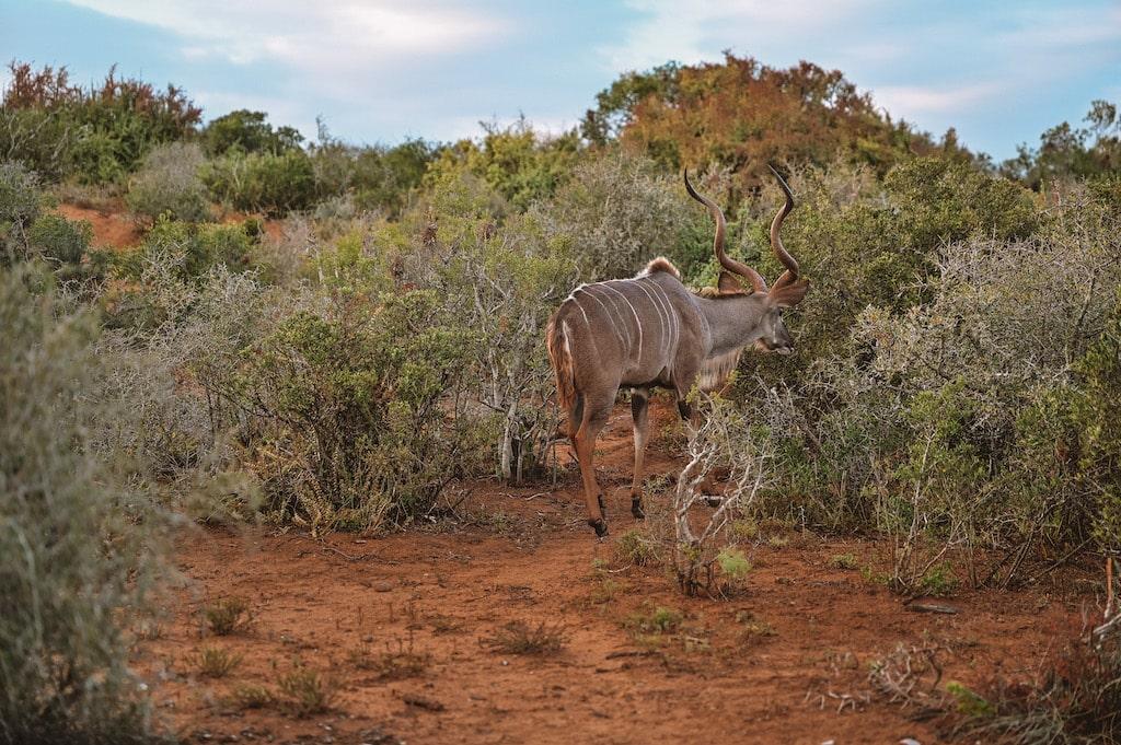 20 Photos inside Safari, South Africa4