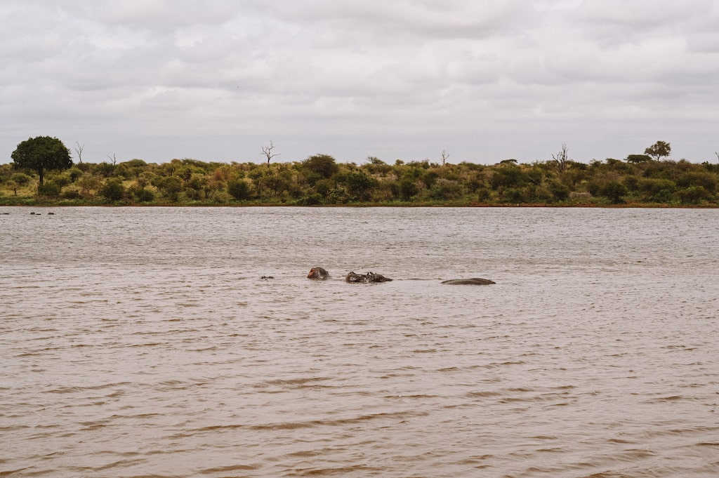 The Hippopotamus * 20 Photos inside Safari, South Africa